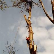 Výškové práce - Spiľovanie stromov (2)